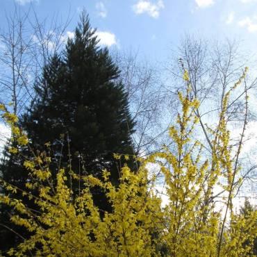 Le jardin buissonnier