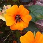 fleur Rucher Trois Vergers