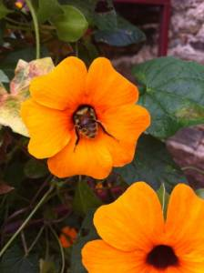 jolie fleur buttinée