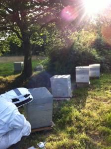 un rucher à St Jory de Chalais