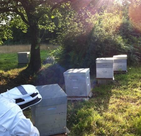 Les abeilles, les ruchers