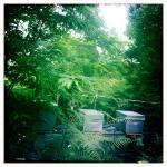 Rucher Périgord Vert Dordogne