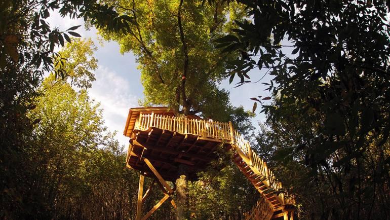 Stage apicole avec hébergement insolite en forêt du 25 et 26 mai 2019