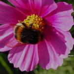 abeille formation apicole miel bio
